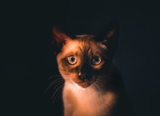 kuweta i żwirek dla kota